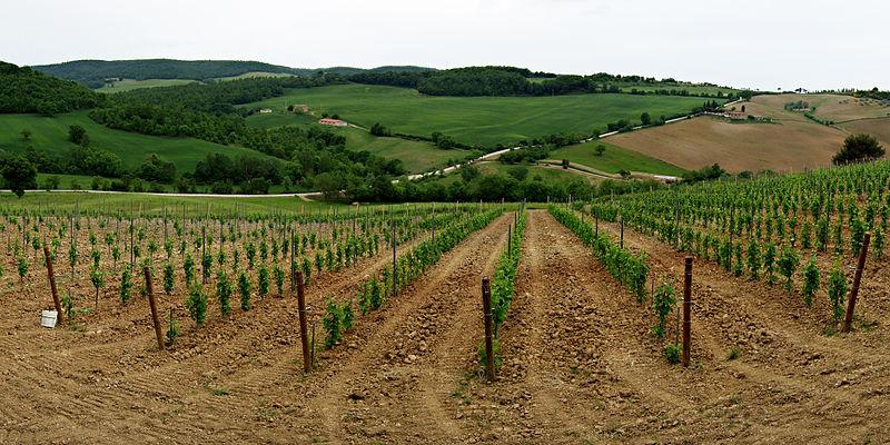 wino z toskanii vino nobile di montepulciano